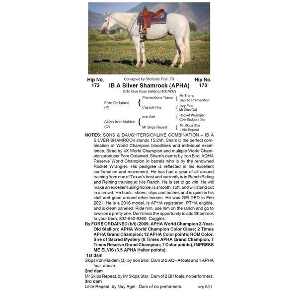 IB A Silver Shamrock (APHA)