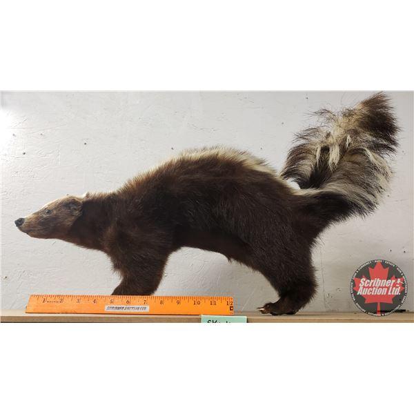 "Taxidermy Skunk (16""H x 6""W x 24""D)"
