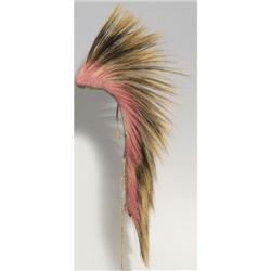 293: Northern Plains Hair Roach