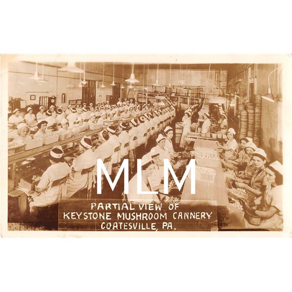 Partial View Keystone Mushroom Cannery Interior Coatesville, Pennsylvania Photo Postcard