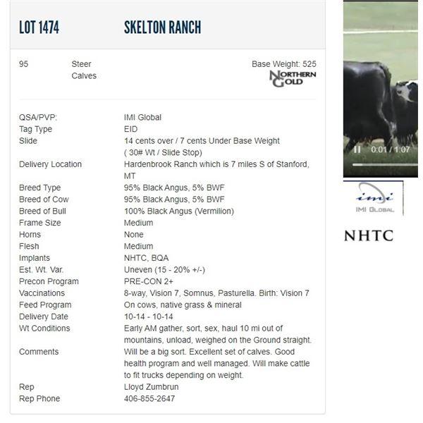 Skelton Ranch - 95 Steers Base Weight: 525