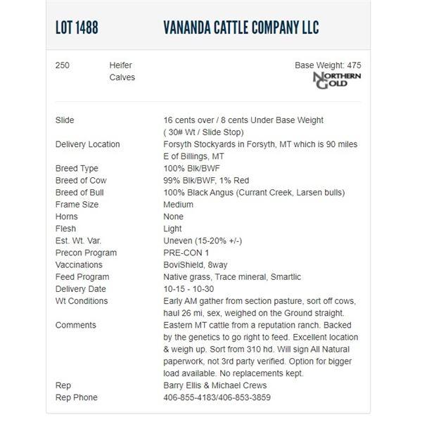 Vananda Cattle Company LLC - 250 Heifers Base Weight: 475