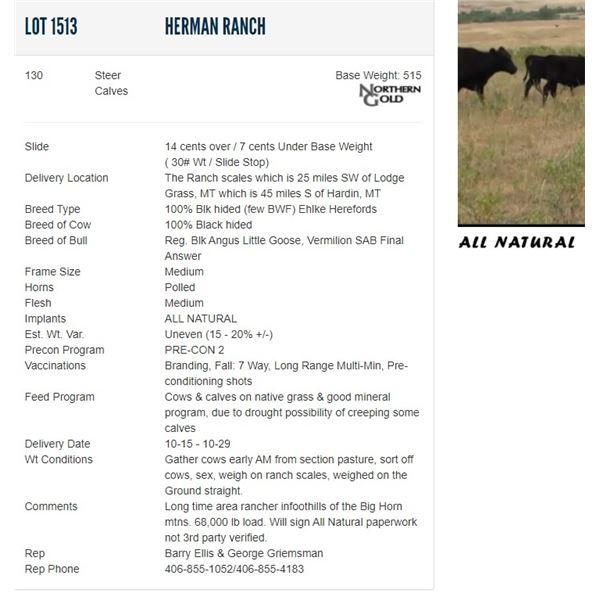 Herman Ranch - 130 Steers Base Weight: 515