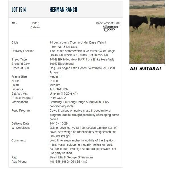 Herman Ranch - 135 Heifers Base Weight: 500