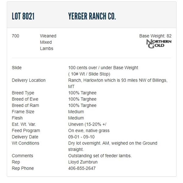 Yerger Ranch Co. - 700 Weaned Mixeds Lambs Base Weight: 82