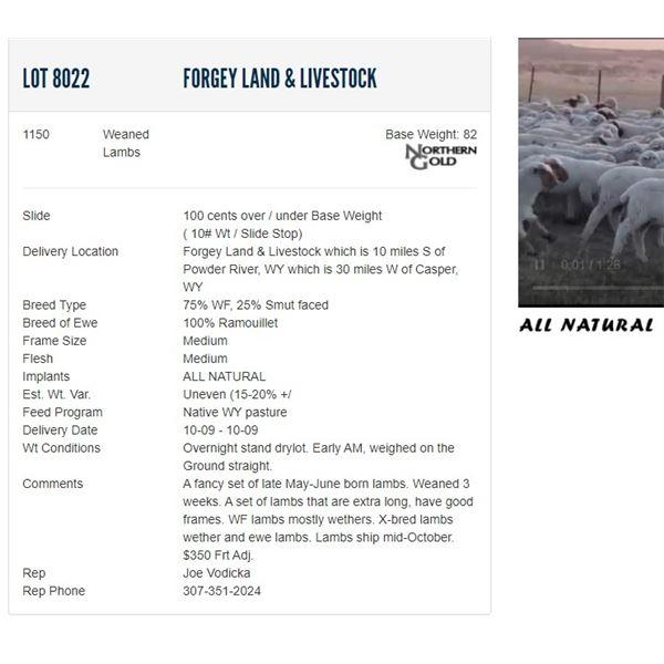 Forgey Land & Livestock - 1150 Weaneds Lambs Base Weight: 82