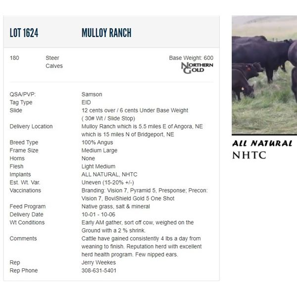 Mulloy Ranch - 180 Steers Base Weight: 600