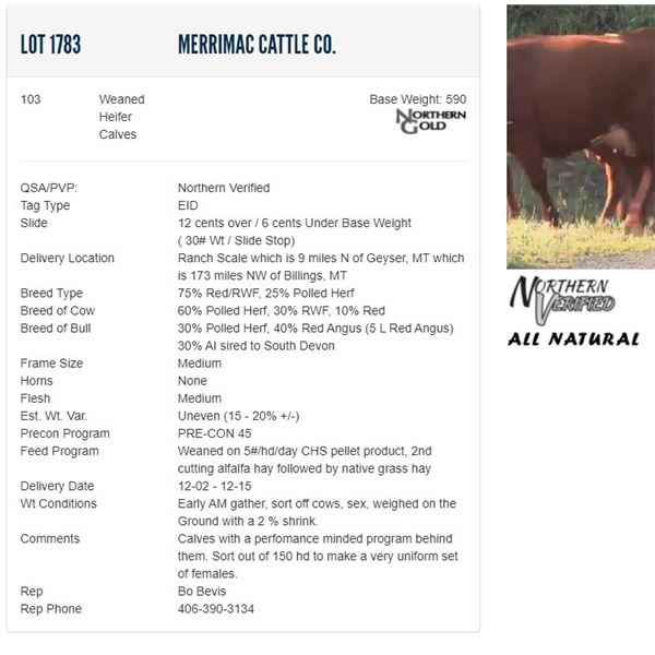 Merrimac Cattle Co. - 103 Weaned Heifers Base Weight: 590