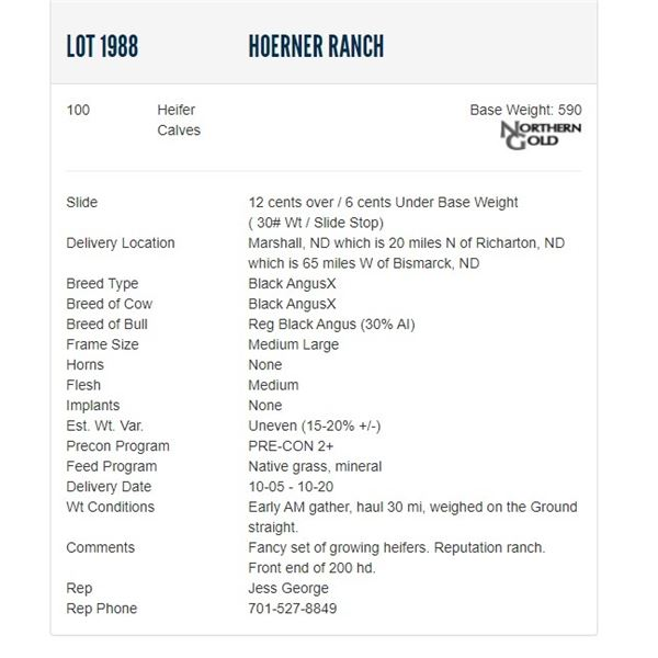 Hoerner Ranch - 100 Heifers, Base Weight: 590