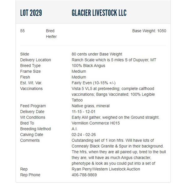 Glacier Livestock LLC - 55 Bred Heifers, Base Weight: 1050