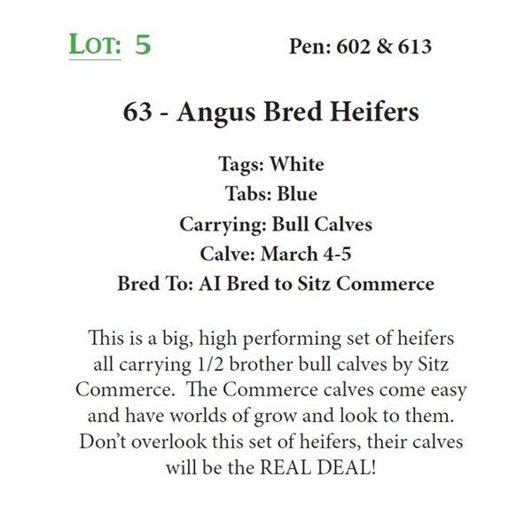 63 - Angus Bred Heifers