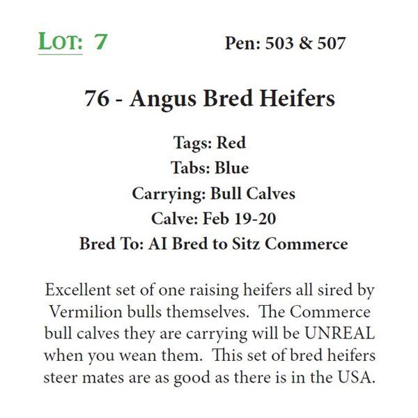 76 - Angus Bred Heifers