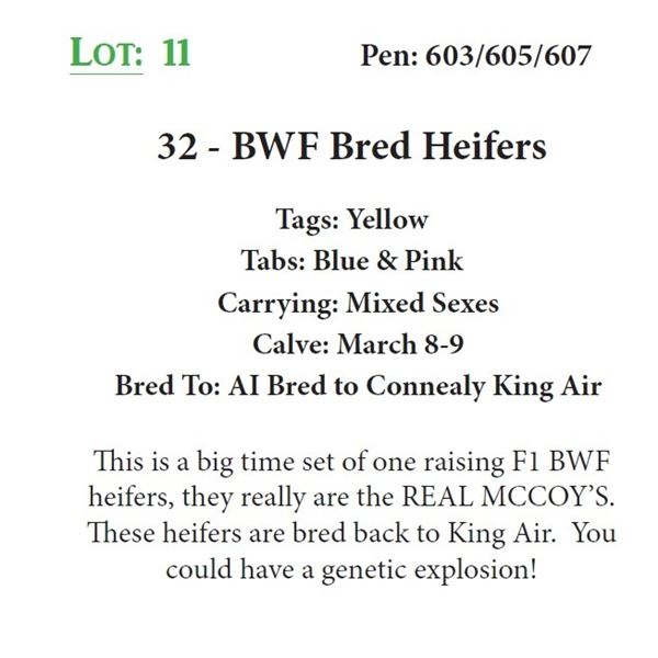 32 - BWF Bred Heifers