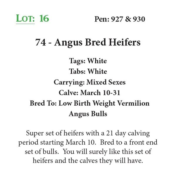 74 - Angus Bred Heifers