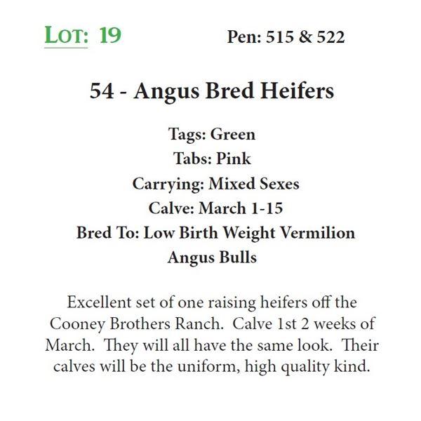 54 - Angus Bred Heifers