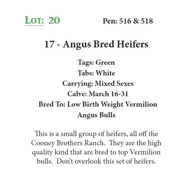 17 - Angus Bred Heifers
