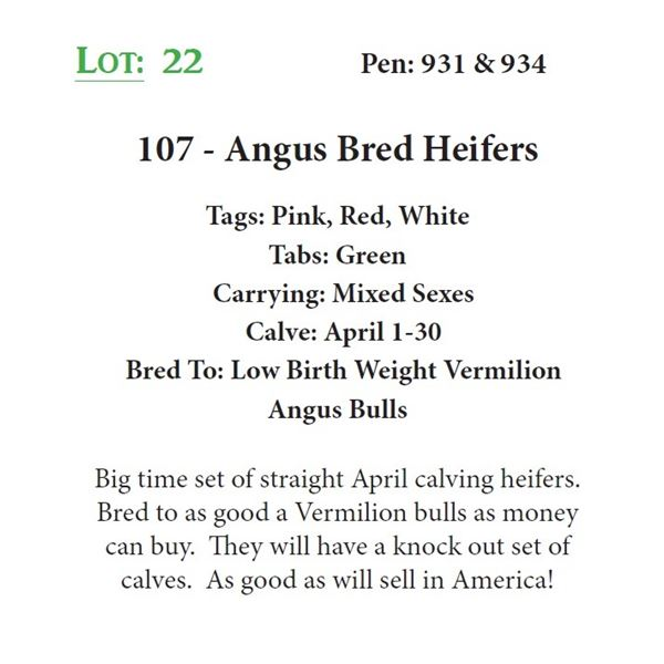 107 - Angus Bred Heifers