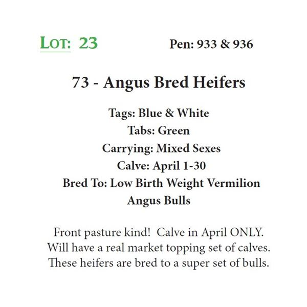 73 - Angus Bred Heifers