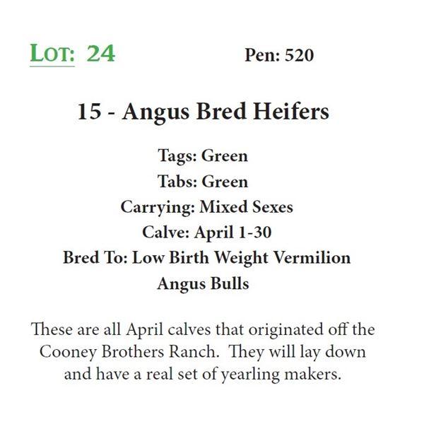15 - Angus Bred Heifers