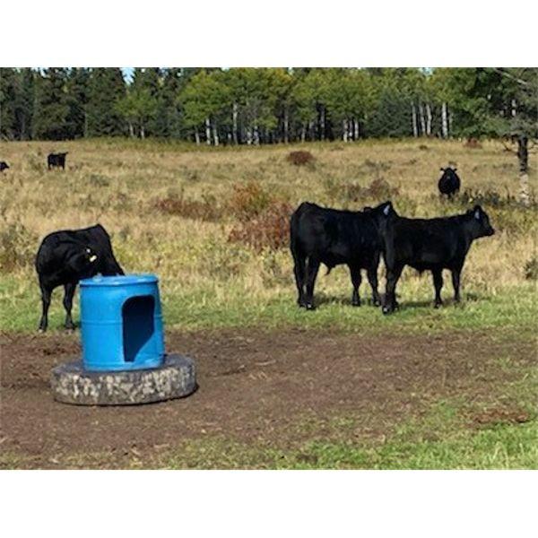 *VBP+* Circle J Ranches - 590# Steer Calves - 90 Head (Cochrane, AB)
