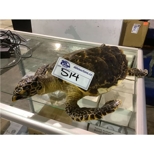 TAXIDERMY TURTLE WITH VISIBLE DAMAGE