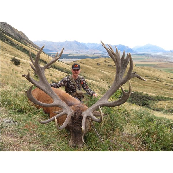 Red Stag hunt in New Zealand with Track and Trail Safaries on the South Island.