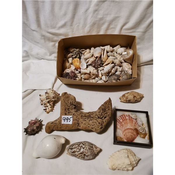 Lot of seashells & driftwood