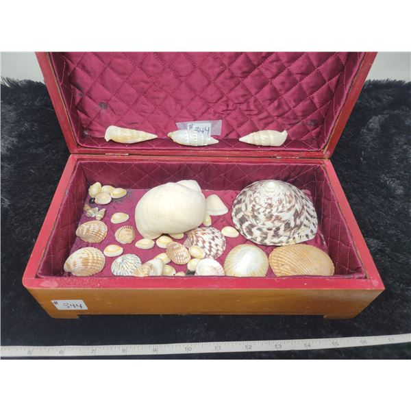 Cedar box with seashell collection