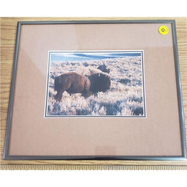 "Framed picture of Bison 10""x12"""