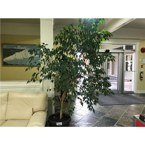 3 LIVE PLANTS (8' ORNAMENTAL FIG TREE & 4' PLANT & YUCCA PLANT