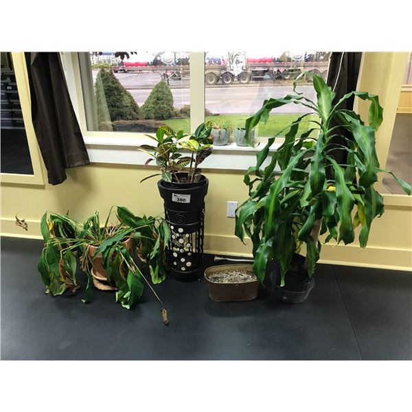 3 LIVE PLANTS