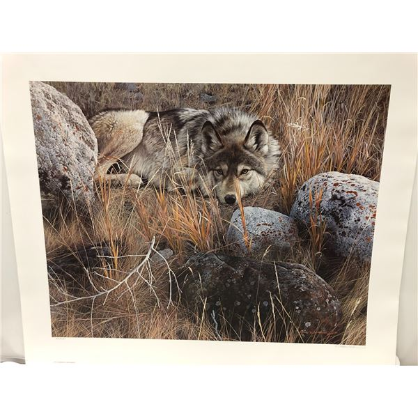 """Carl Brenders """"One To One - Gray Wolf"""" limited edition #470/10000 print signed by artist - approx. 3"""