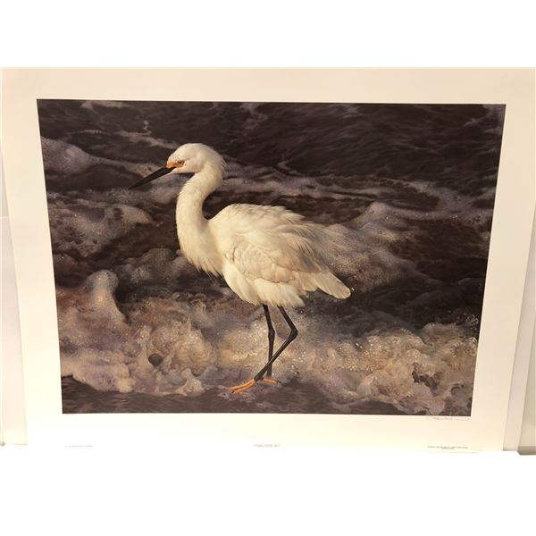 """Carl Brenders limited edition print """"Island Shores - Snowy Egret"""" #403/2500 signed by artist"""