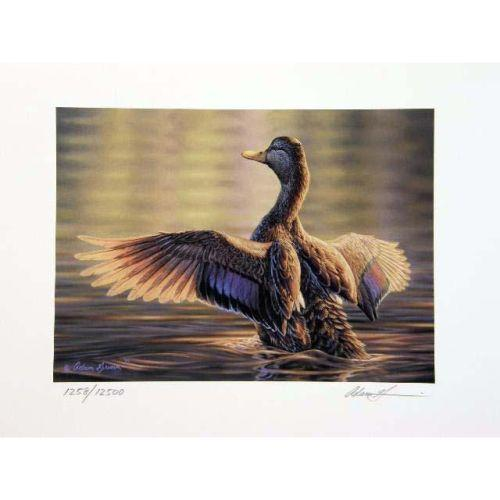huge selection of 1eb9b 55414 SEVEN FEDERAL DUCK STAMP PRINTS