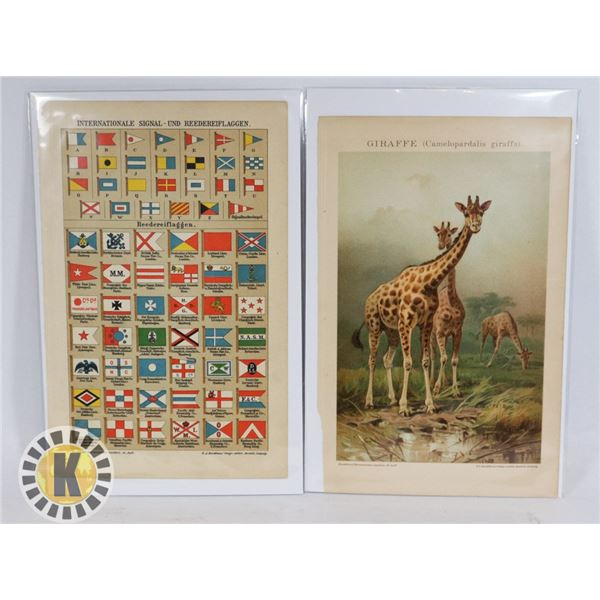#486 LOT OF 2 VINTAGE PRINTS PLATES,  GIRAFFE AND