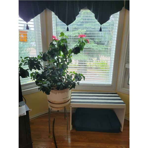 White Bench with Beautiful Flowering Houseplant