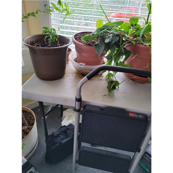 2 Houseplants with Step Ladder
