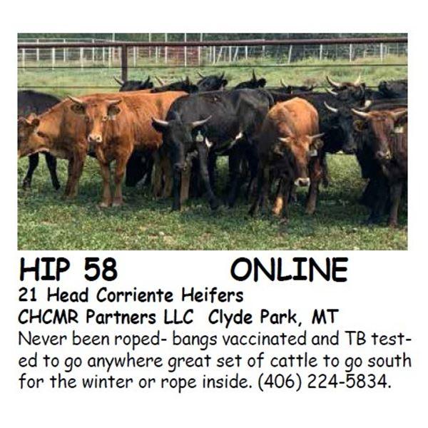 21 Head Corriente Heifers