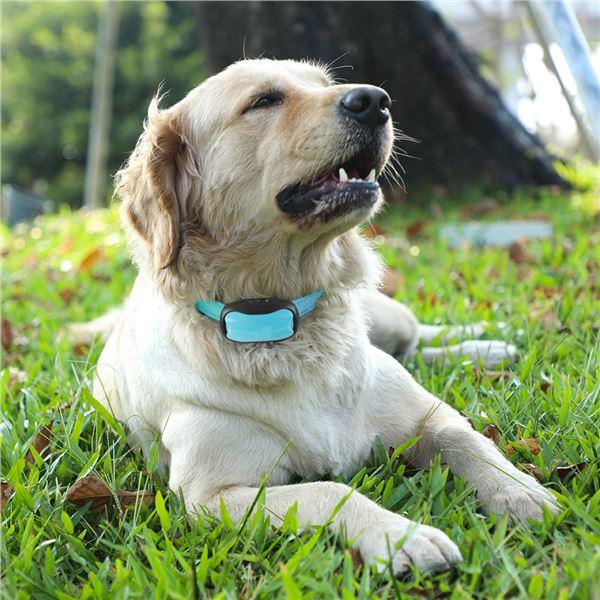 NEW ANTI BARK DOG COLLAR (NON-SHOCKING)