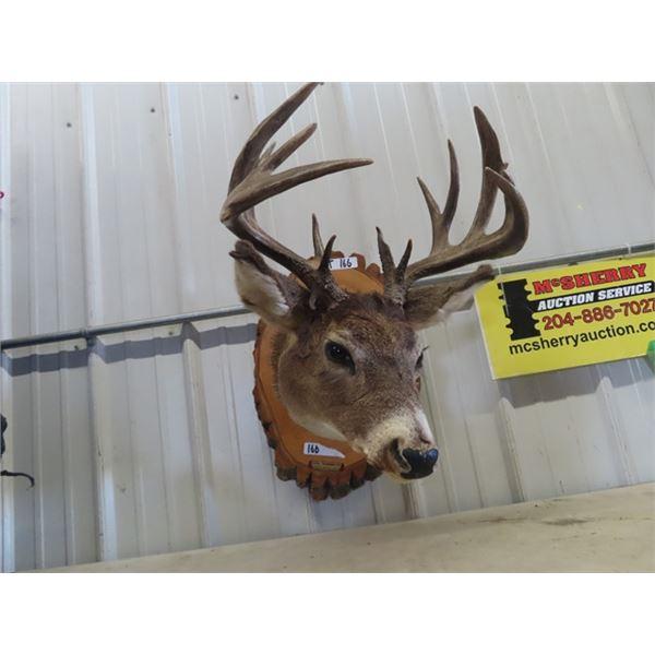 (DT) Mounted Deer Head w Tag