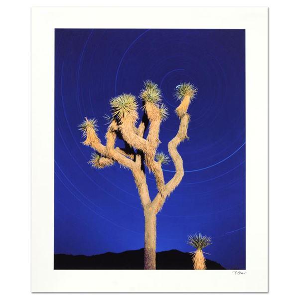 "Robert Sheer ""Joshua Tree"" Limited Edition Photo On Paper"