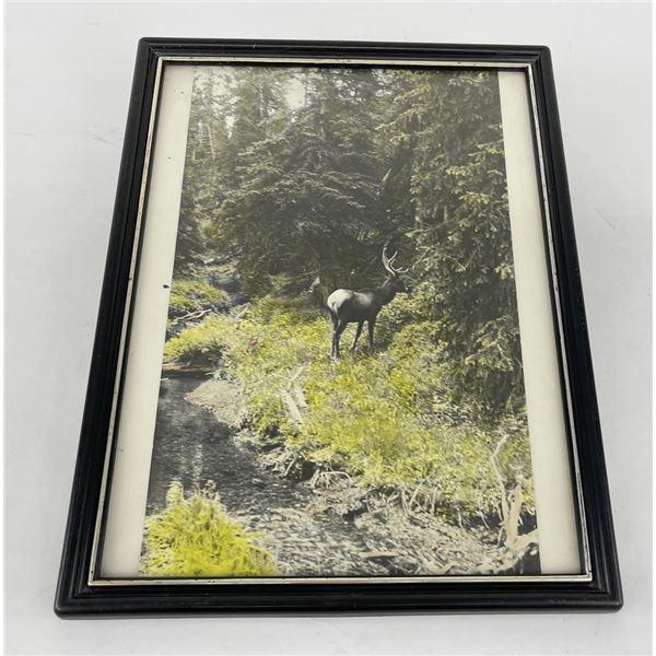 Antique Hand Tinted Montana Elk Photo