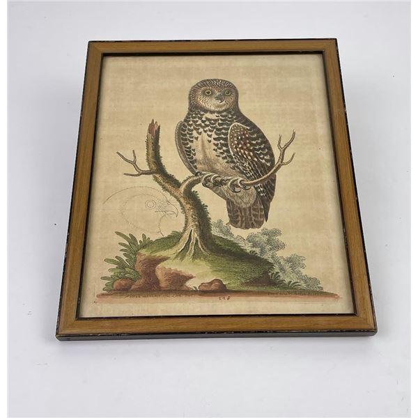 George Edwards Delin Owl Print