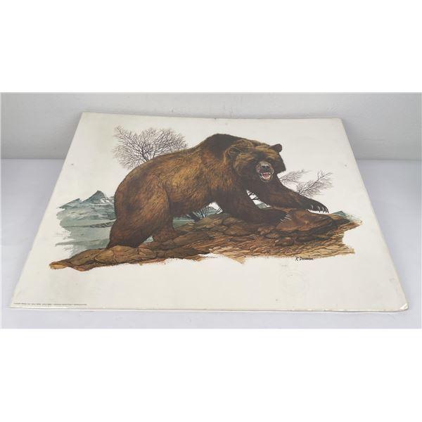 University of Montana Dorman Grizzly Bear Print