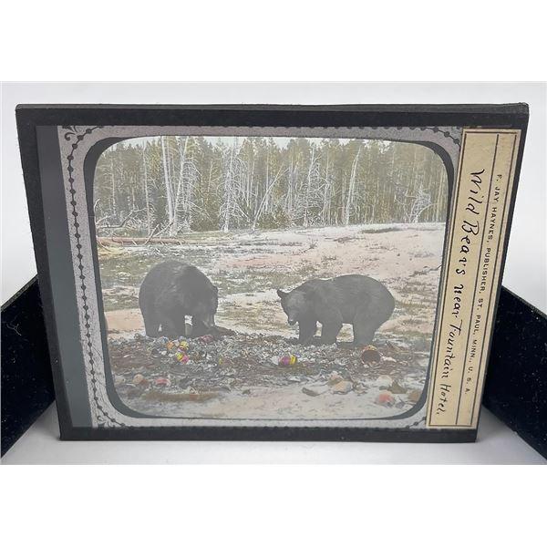 Yellowstone Park Bears Magic Lantern Slide