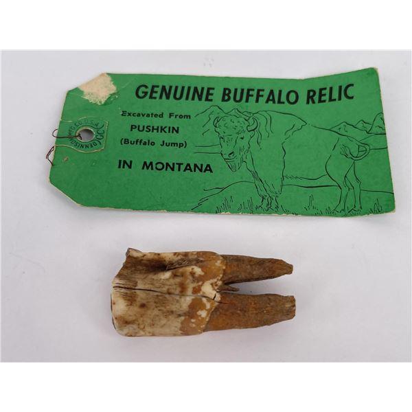 Montana Buffalo Jump Recovered Tooth
