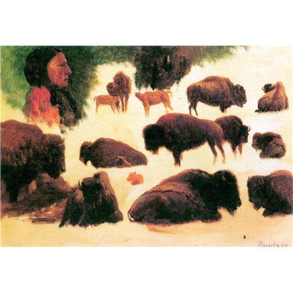 Study of Buffalos by Albert Bierstadt