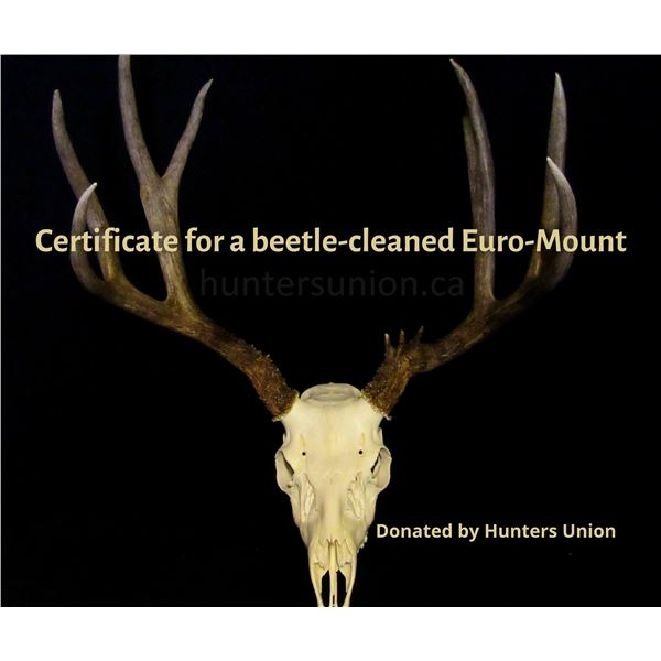European Skull Mount (beetle cleaned) Gift Certificate