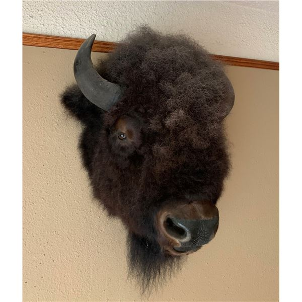 MOUNTED BISON HEAD