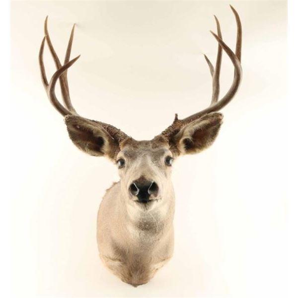 4x4 Deer Head Mount